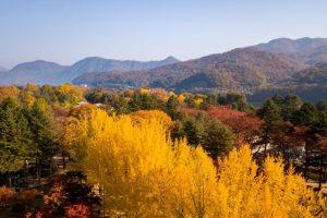 Autumn of Nami island,Seoul Korea